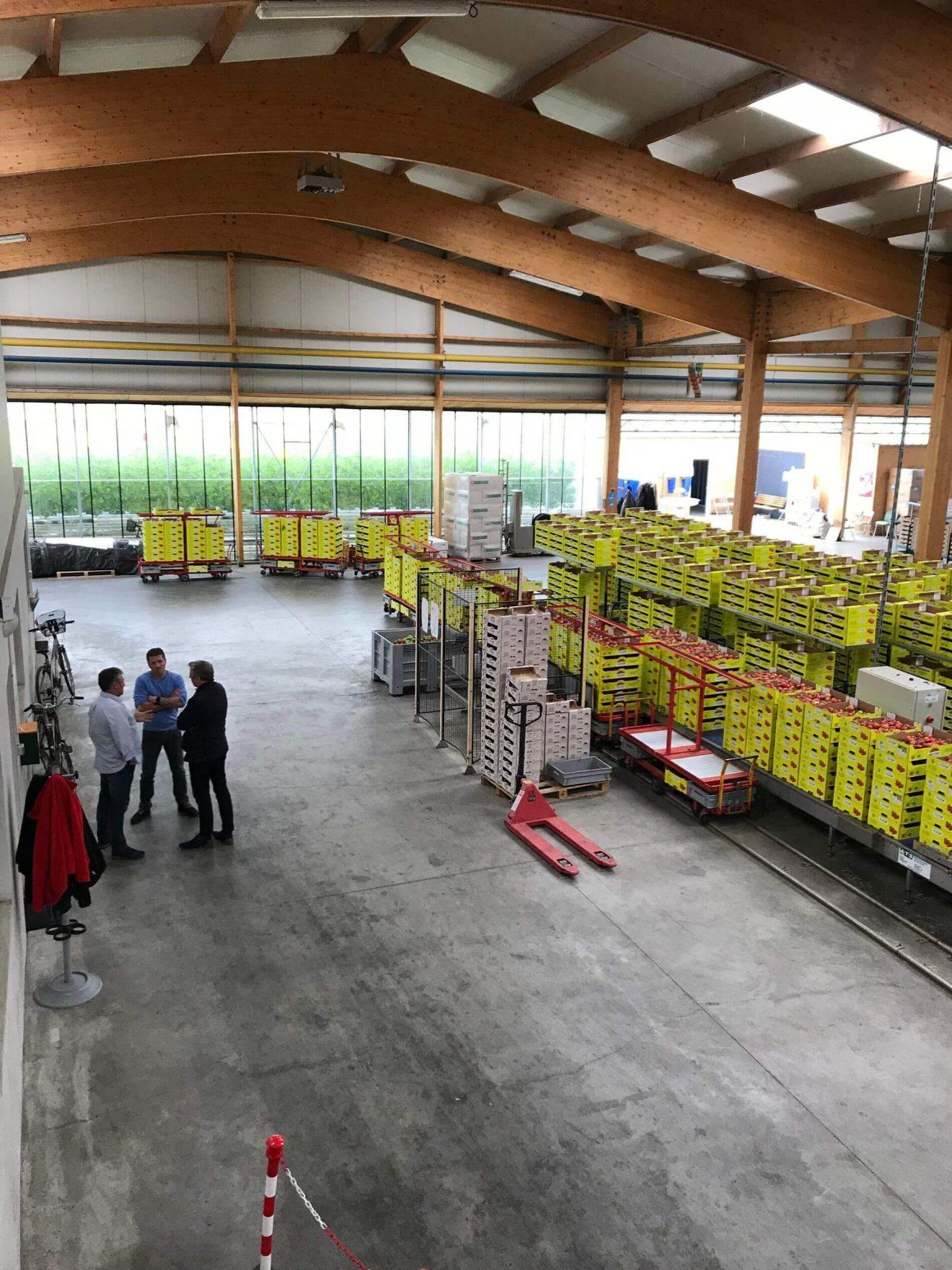 Agriculture : Visite des serres de tomates